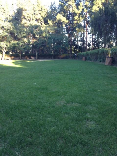 Upper lawn