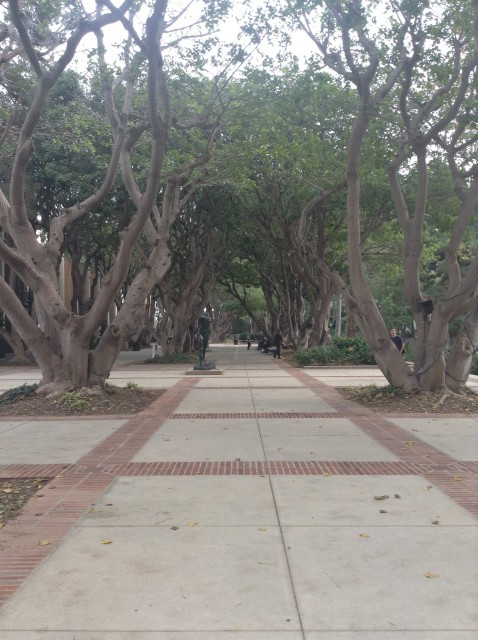 Coral Tree Walk